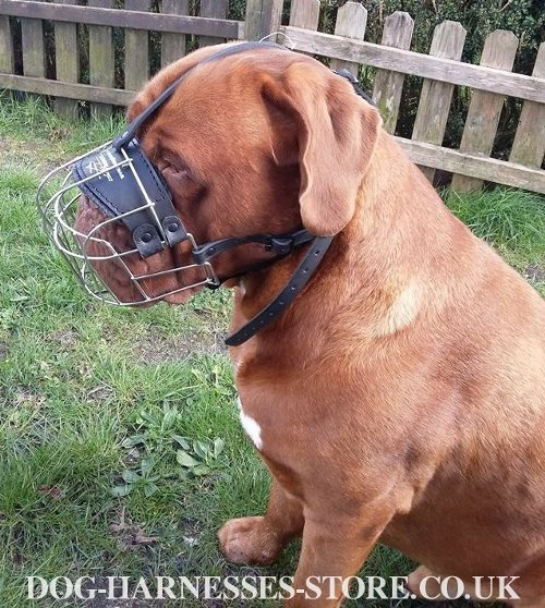 Muzzle for Dogue de Bordeaux UK