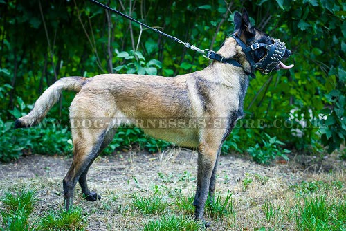 Muzzle for Malinois