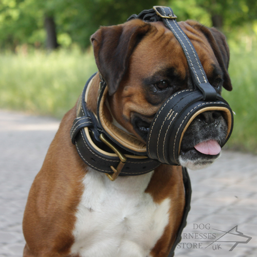 Buy Dog Muzzle UK