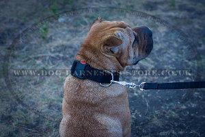 Dog Safety Leash