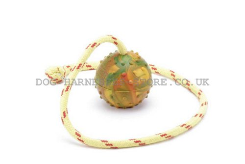 Dog Training Ball on Rope