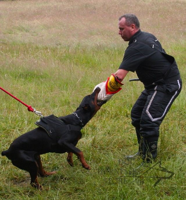 Doberman breeders who consistently win schutzhund and ipo
