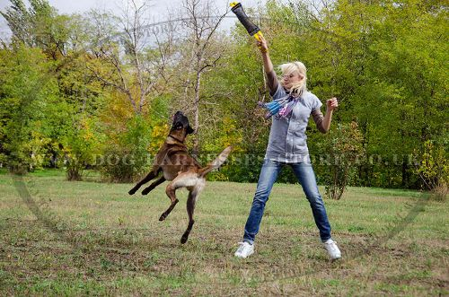 Belgian Malinois Training