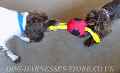 Best Dog Toys for Cocker Spaniels