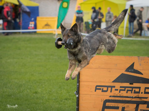 Buy Dog Agility Equipment UK