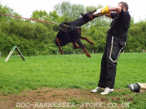Dog Training Equipment Suppliers