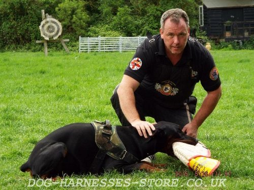 Dog Training with Schutzhund Sleeve