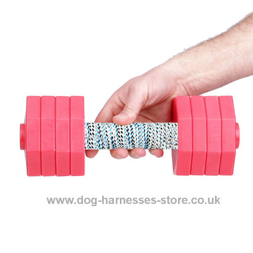 Dog Retrieving Dumbbells