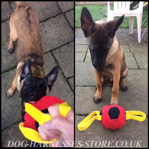 Dog Toy for Belgian Malinois