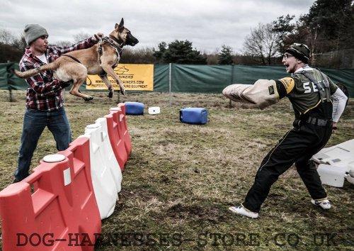 Professional Working Dog Breeders Uk