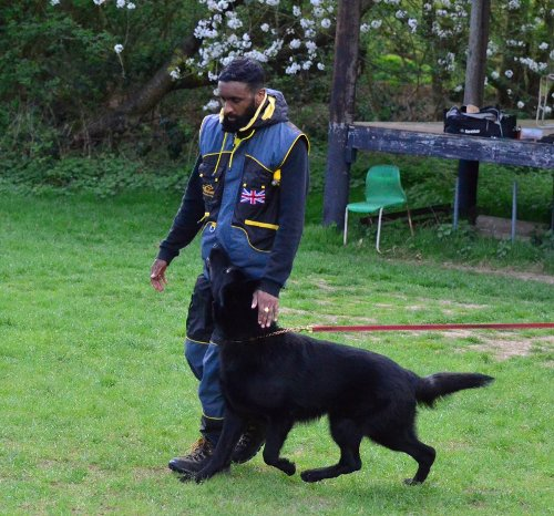 Dog Training Suit for Sale