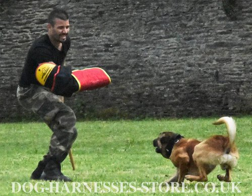 Malinois Training Gear for IGP
