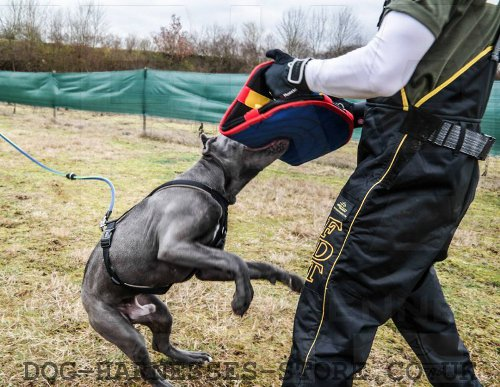 Pitbull Attack Training
