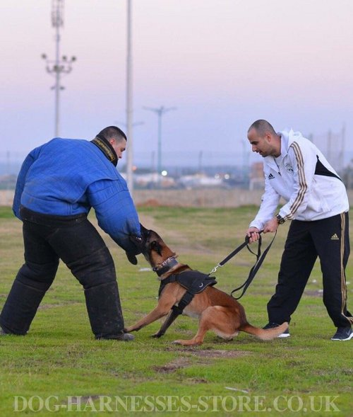 Belgian Malinois Attack Training UK