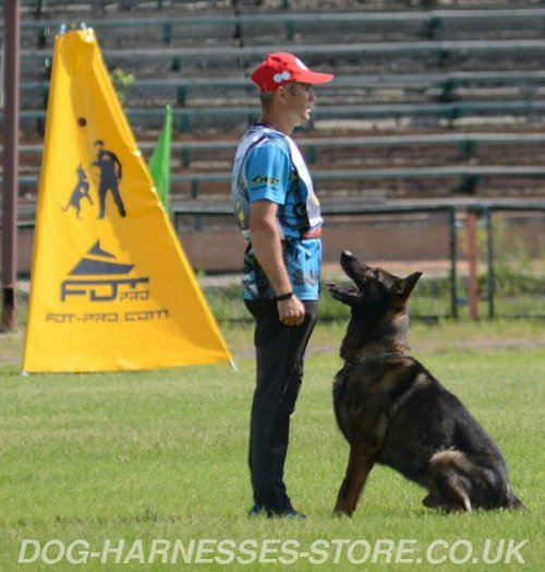 Mantrailing Dog Training