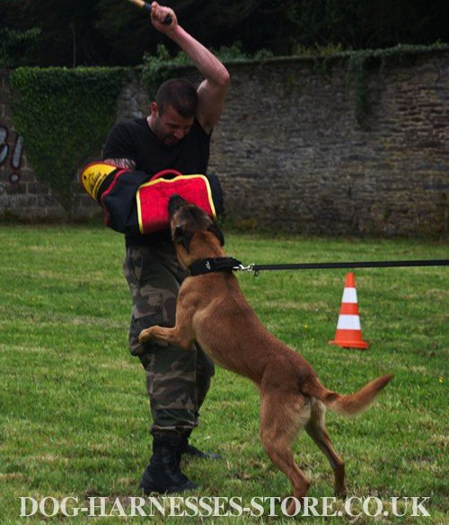 IGP Sleeve UK for Belgian Shepherd