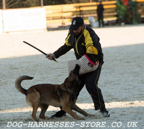Modioring Dog Training