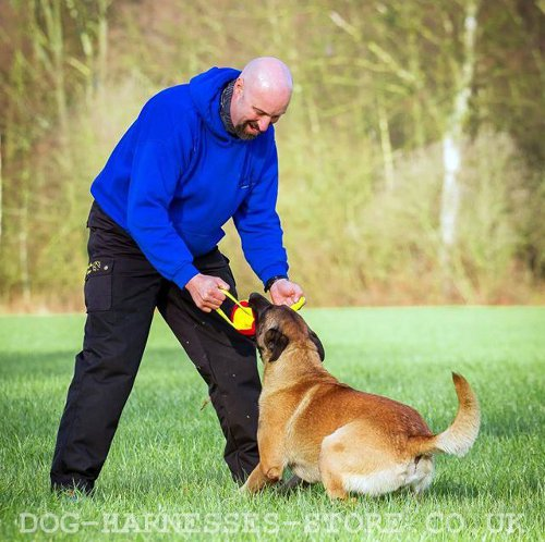 Dog Training for Pulling
