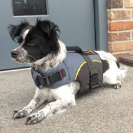 Dog Vest to Warm Your Cross Breed Dog