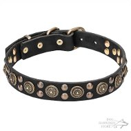 Dog Walking Collar Leather with Round Brass Plates and Studs