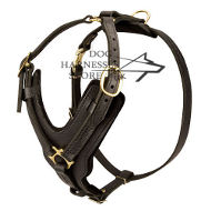 Padded Leather Dog Harness for Large Dogs, Handmade Luxury
