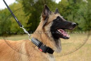 Durable Nylon Dog Leash