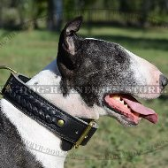 English Bull Terrier Collar, Two-Ply Wide Leather and Braids