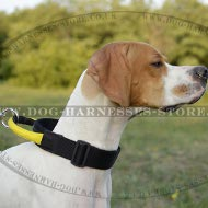 English Pointer Collar of Nylon with Strong Handle and Buckle