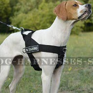 English Pointer Harness of Nylon with Patches, Multifunctional