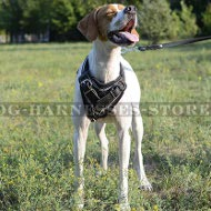 English Pointer Harness Leather Handmade Barbwire Hand Painted