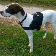 Bestseller! English Pointer Harness for Walking and Training
