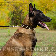 Exclusive Dog Collar with Spikes and Studs for Belgian Shepherd