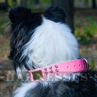 Female Collie Pink Leather Dog Collar with Spikes, Cones, Plates