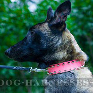 Girl Dog Collar Pink Leather and Spikes for Belgian Malinois