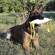 Dog Training Equipment