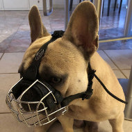 French Bulldog Basket Muzzle of Wire for Every Day