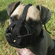 French Bulldog Dog Muzzle of Leather with Free Airflow