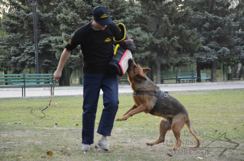 GSD and Handler
