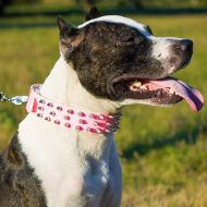 Hot Pink Leather Girl Pitbull Collar with Barbs - Flashy Look