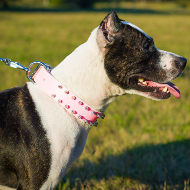 Girl Pitbull Collar in Pink Leather with Two Rows of Spikes