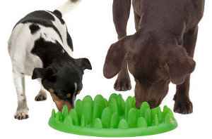 Green Modern Interactive Dog Feeder