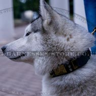 Husky Dog Collar Leather with Spikes and Plates in Antique Style