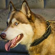 Husky Dog Collar of Two-Ply Leather with Elegant Braid