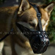 Husky Dog Muzzle Leather with Unique Barbed Wire Hand Painting