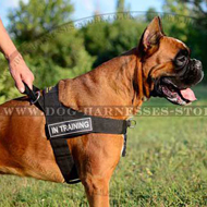K9 Dog Harness UK for German Boxer Sport and Training!