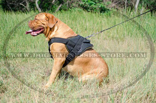 Dogue de Bordeaux Harnesses UK