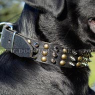 Labrador Dog Collar of Leather with Columns of Spikes and Studs