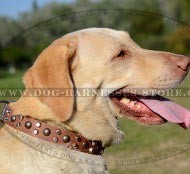 Labrador Dog Collar Leather with Studs and Cones, Modern Design