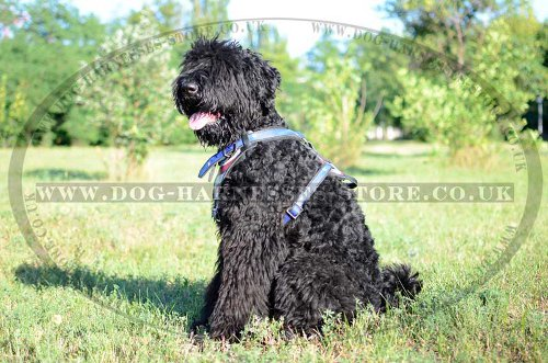 Russian terrier dog harness