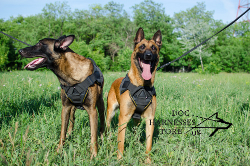Padded Dog Harness for Malinois